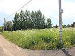 земельный участок в СНТ Надежда у деревни Чичково, Киевское шоссе
